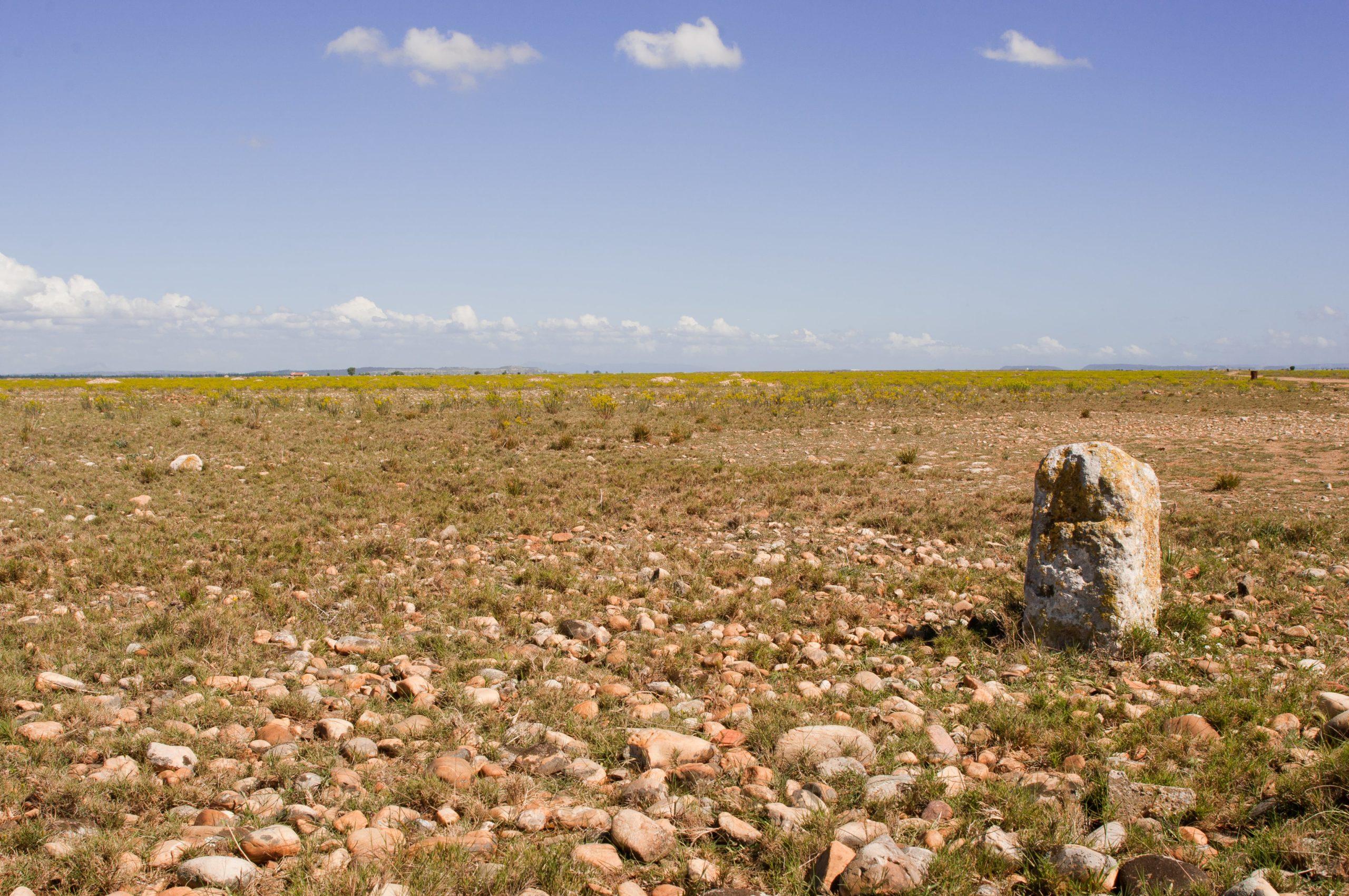 image d'illustration Réserve naturelle nationale des Coussouls de Crau