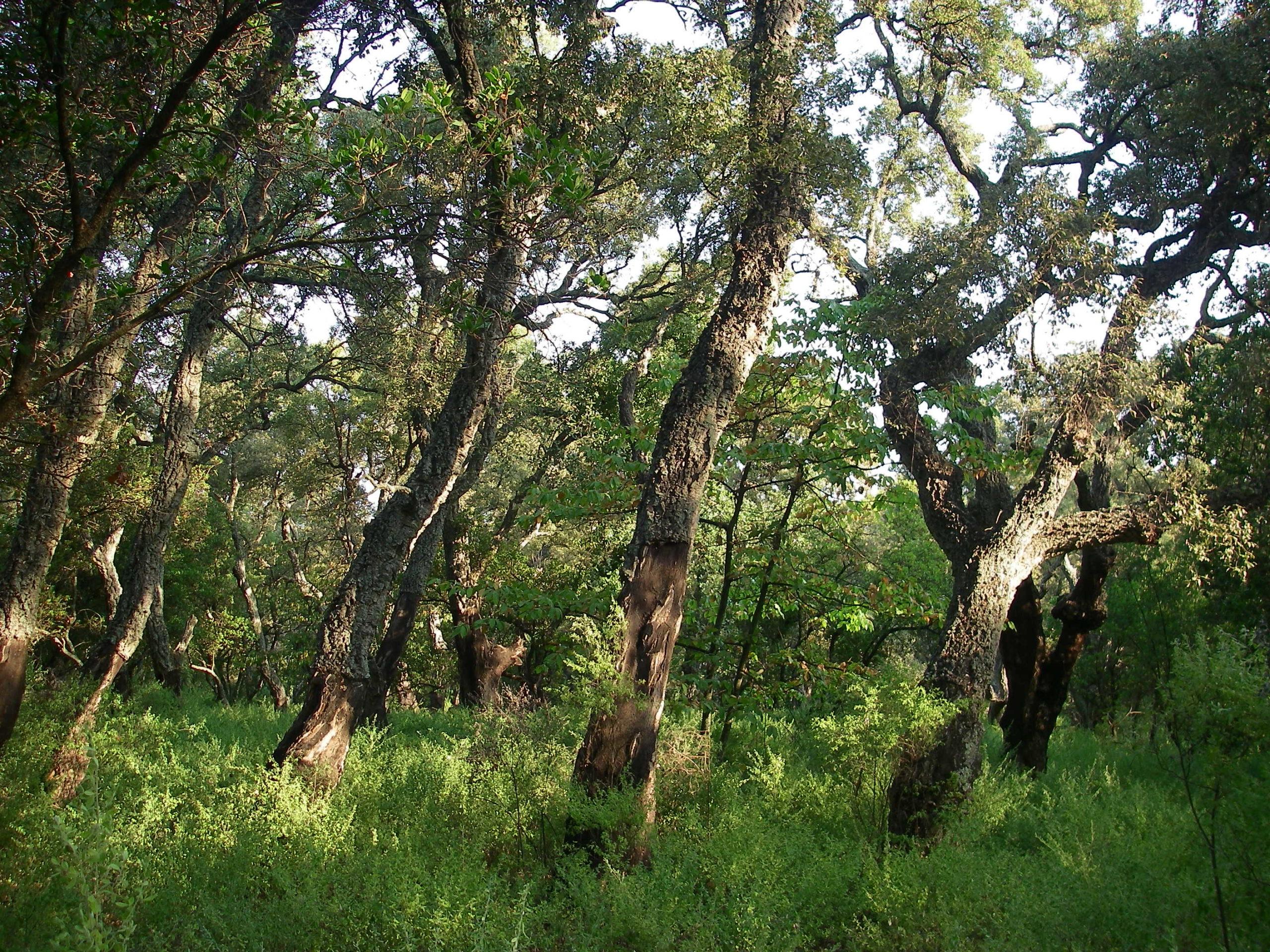image d'illustration Les écosystèmes forestiers